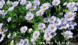 f:id:mikawakinta63:20151026172320j:image:left