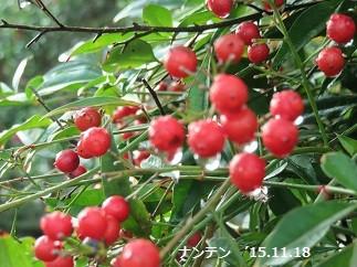 f:id:mikawakinta63:20151118160115j:image:right