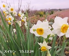 f:id:mikawakinta63:20151224150256j:image:left