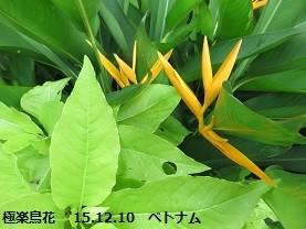 f:id:mikawakinta63:20151224150553j:image:left