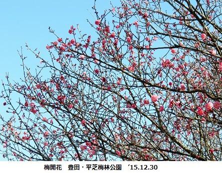 f:id:mikawakinta63:20151230193658j:image