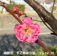 f:id:mikawakinta63:20151230213030j:image:left
