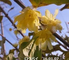 f:id:mikawakinta63:20160111141038j:image:right