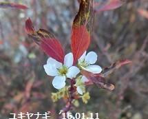 f:id:mikawakinta63:20160115140615j:image:left