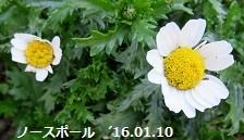 f:id:mikawakinta63:20160115153418j:image:left
