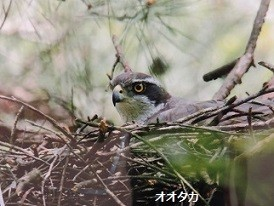 f:id:mikawakinta63:20160119150740j:image:right