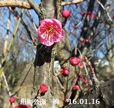 f:id:mikawakinta63:20160121163637j:image:left