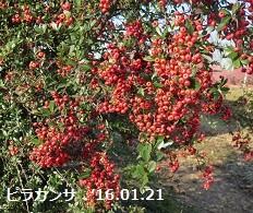 f:id:mikawakinta63:20160122144038j:image:right
