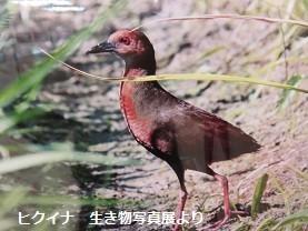 f:id:mikawakinta63:20160122144250j:image:left