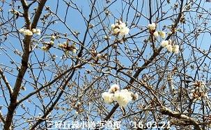 f:id:mikawakinta63:20160321201030j:image:left