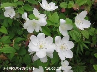 f:id:mikawakinta63:20160528222200j:image:right