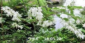 f:id:mikawakinta63:20160528223143j:image:left
