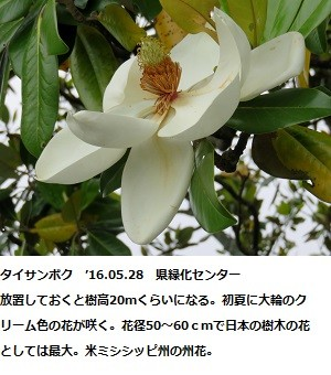 f:id:mikawakinta63:20160602145504j:image:right