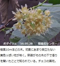 f:id:mikawakinta63:20160602194905j:image:left