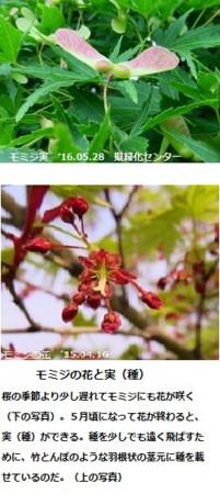 f:id:mikawakinta63:20160603141050j:image:right