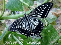 f:id:mikawakinta63:20160603155347j:image:left