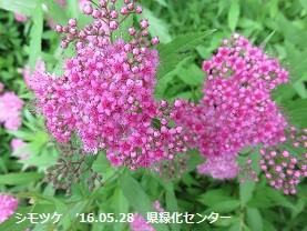 f:id:mikawakinta63:20160604201348j:image:left