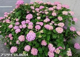 f:id:mikawakinta63:20160606152349j:image:right