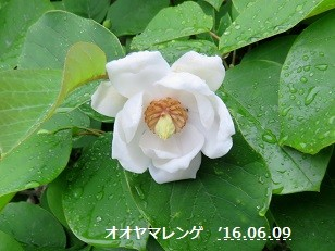 f:id:mikawakinta63:20160614150751j:image:left