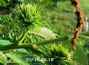 f:id:mikawakinta63:20160620153710j:image:right