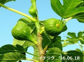 f:id:mikawakinta63:20160620154039j:image:right