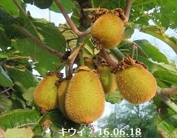 f:id:mikawakinta63:20160620154521j:image:left