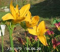 f:id:mikawakinta63:20160621144224j:image:left