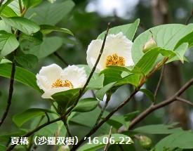 f:id:mikawakinta63:20160628142807j:image:left