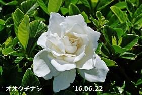 f:id:mikawakinta63:20160629141637j:image:right