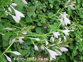 f:id:mikawakinta63:20160630145329j:image:left