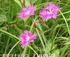 f:id:mikawakinta63:20160701215438j:image:left