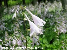 f:id:mikawakinta63:20160706144907j:image:left