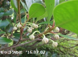 f:id:mikawakinta63:20160706152947j:image:right