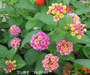 f:id:mikawakinta63:20160707132432j:image:right