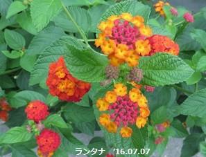 f:id:mikawakinta63:20160708152815j:image:right