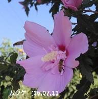 f:id:mikawakinta63:20160713155421j:image:left