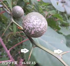 f:id:mikawakinta63:20160715144353j:image:right