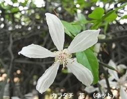 f:id:mikawakinta63:20160715152520j:image:left