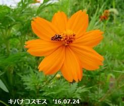 f:id:mikawakinta63:20160725151003j:image:left