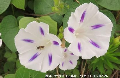f:id:mikawakinta63:20160726103641j:image