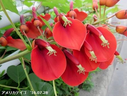 f:id:mikawakinta63:20160728141742j:image