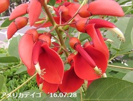 f:id:mikawakinta63:20160729161757j:image:right
