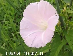 f:id:mikawakinta63:20160803141034j:image:left
