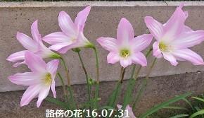 f:id:mikawakinta63:20160803151821j:image:right
