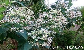 f:id:mikawakinta63:20160810130902j:image:left