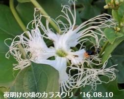 f:id:mikawakinta63:20160810140956j:image:left