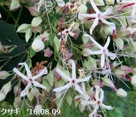 f:id:mikawakinta63:20160810141157j:image:right