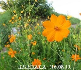 f:id:mikawakinta63:20160811211250j:image:left