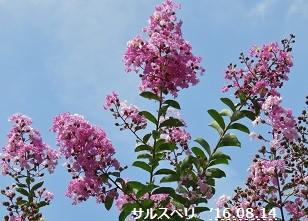 f:id:mikawakinta63:20160814200053j:image:left