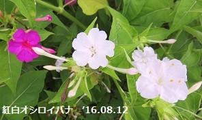 f:id:mikawakinta63:20160815130211j:image:right
